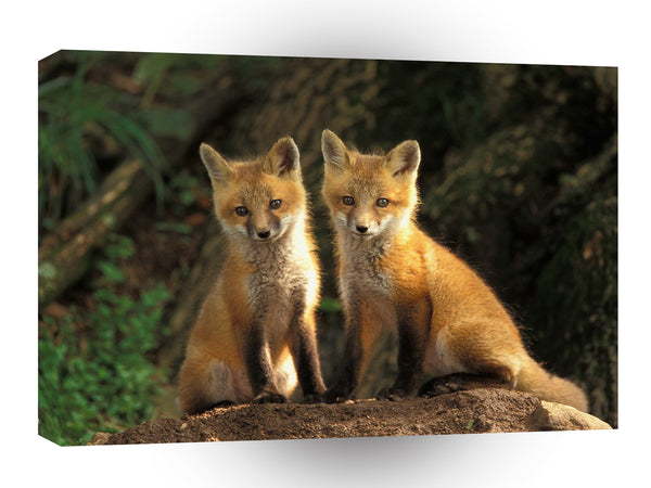 Foxs Young Red Kits Louisville Kentucky A1 Xlarge Canvas