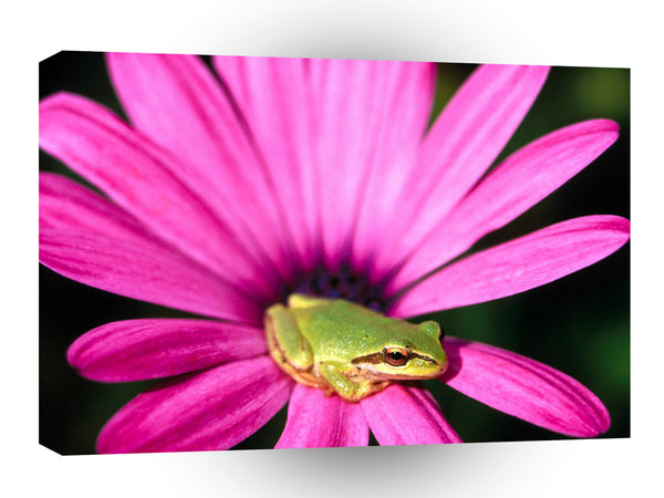 Frog Amazon Tree Sitter A1 Xlarge Canvas