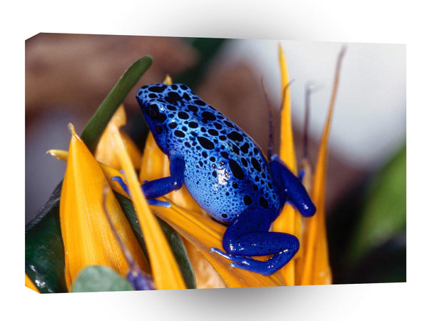 Frog Blue Poison A1 Xlarge Canvas