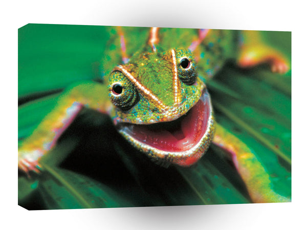 Frog Lounge Lizard A1 Xlarge Canvas