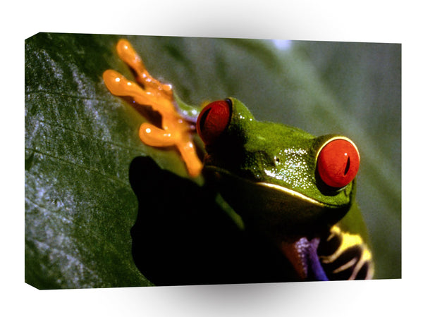 Frog Poisonous Beauty A1 Xlarge Canvas