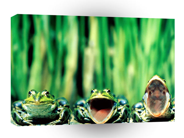 Frog Three Tenors A1 Xlarge Canvas