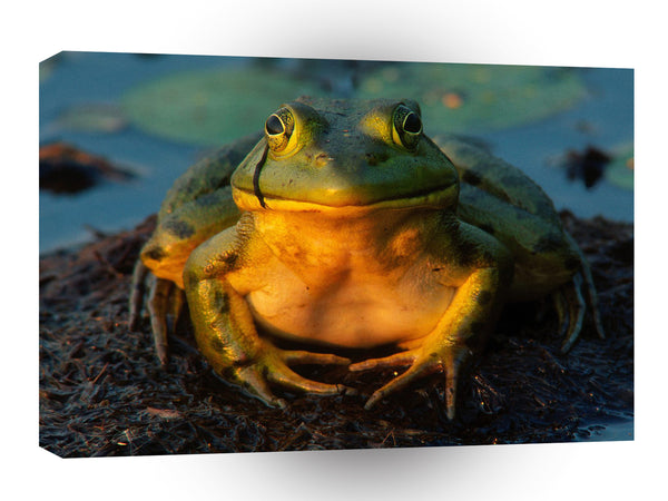 Frog Total Contentment Bull A1 Xlarge Canvas