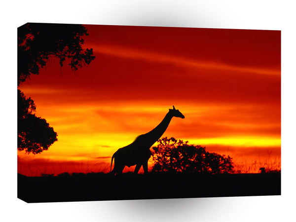 Giraffe A Journey At Dusk A1 Xlarge Canvas