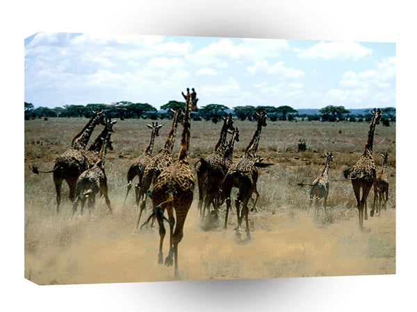 Giraffe Great Stampede A1 Xlarge Canvas