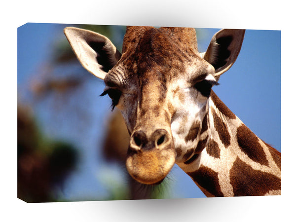 Giraffe Happy Mellow A1 Xlarge Canvas