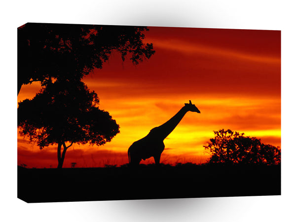 Giraffe Solitary Evening A1 Xlarge Canvas