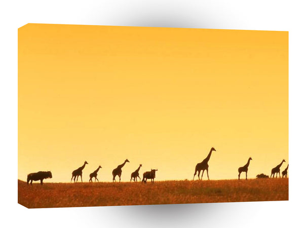 Giraffe Walk Along A1 Xlarge Canvas