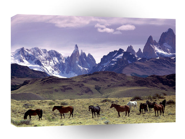 Horse Andes Mountains Argentina A1 Xlarge Canvas