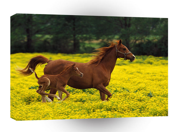 Horse Arabian Mare And Foal Kentucky A1 Xlarge Canvas