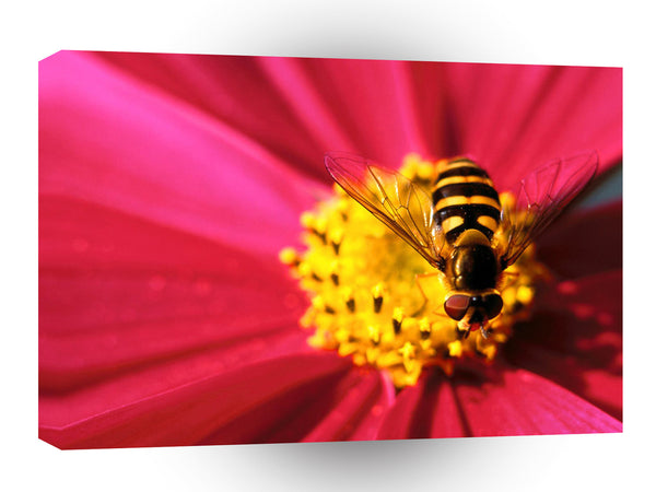Insect Bee A Cosmo Santa Barbara A1 Xlarge Canvas