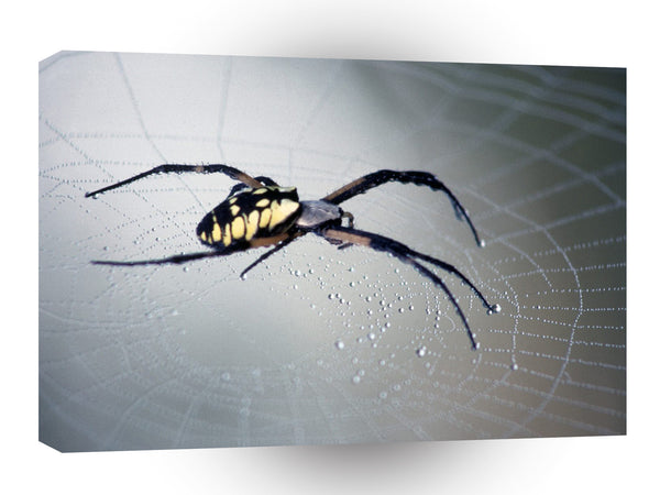 Insect Black And Yellow Argiope A1 Xlarge Canvas