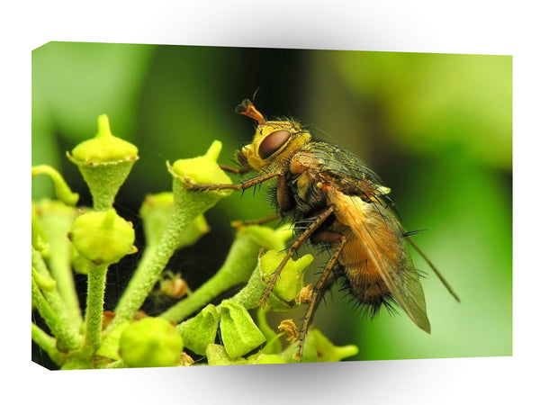 Insect Flies Day Collector A1 Xlarge Canvas