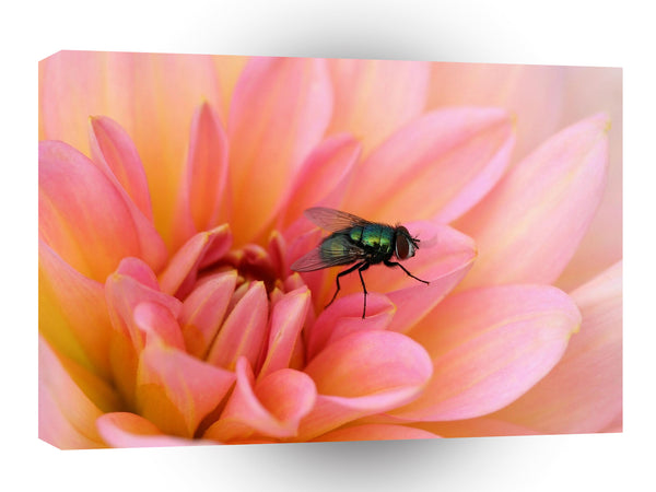 Insect Flies Green Bottle A1 Xlarge Canvas