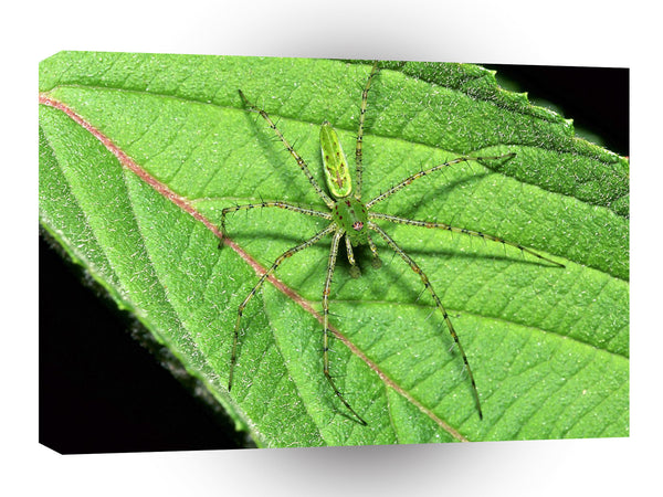 Insect Green Lynx Spider A1 Xlarge Canvas
