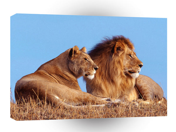 Lions African A1 Xlarge Canvas
