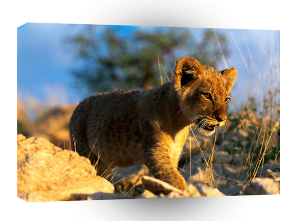 Lions African Cub A1 Xlarge Canvas