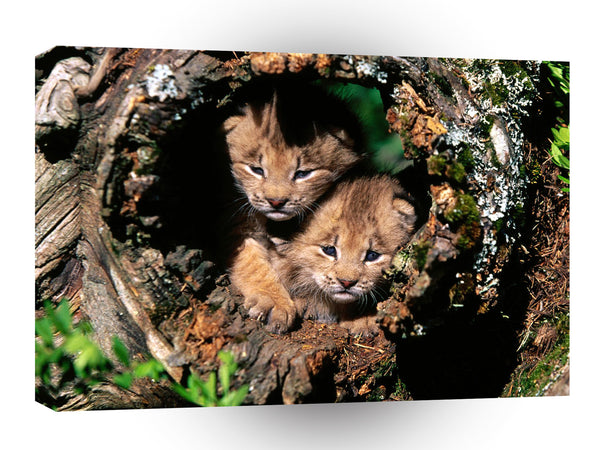 Lynx Hide And Seek Canada A1 Xlarge Canvas