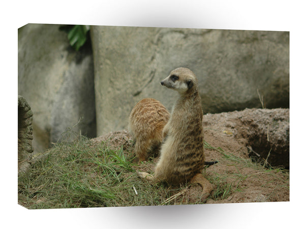 Meerkats Doggystyle A1 Xlarge Canvas