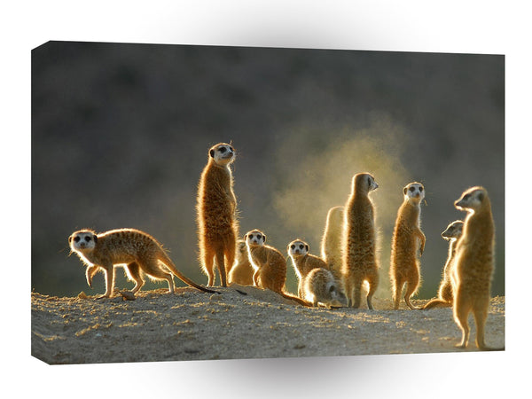 Meerkats Dusty Kats A1 Xlarge Canvas