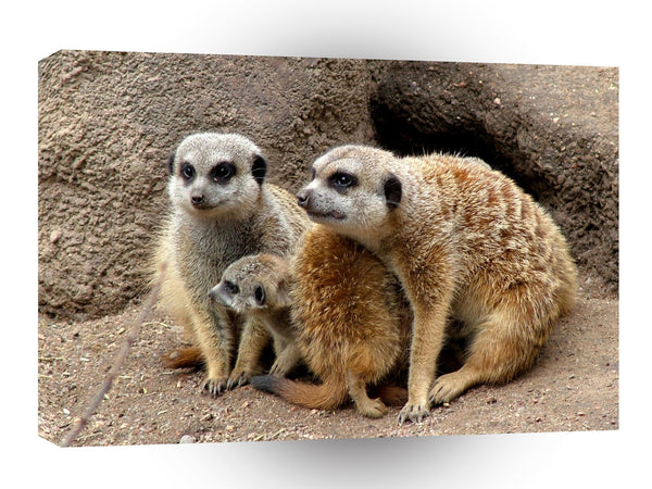 Meerkats Family Matters A1 Xlarge Canvas