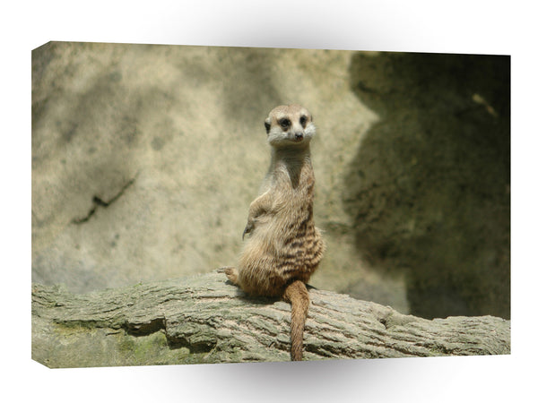 Meerkats Happytimes A1 Xlarge Canvas