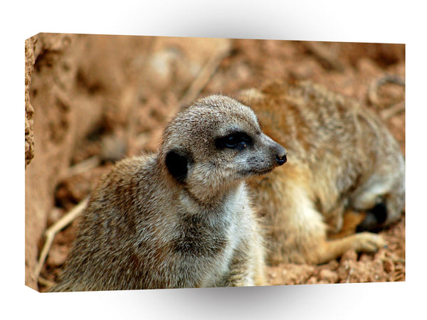 Meerkats In The Den A1 Xlarge Canvas