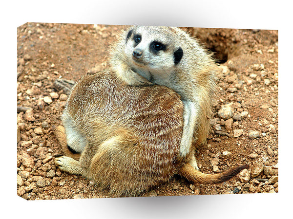 Meerkats Lots Of Hugs A1 Xlarge Canvas
