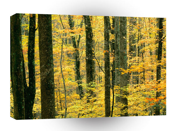Mountain Autumn Forest Great Park A1 Xlarge Canvas