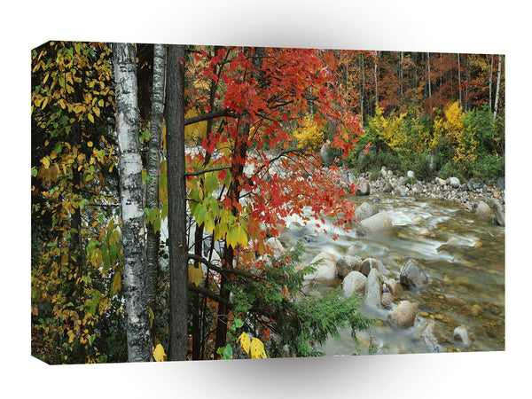 Nature Autumn Ready For Fall A1 Xlarge Canvas