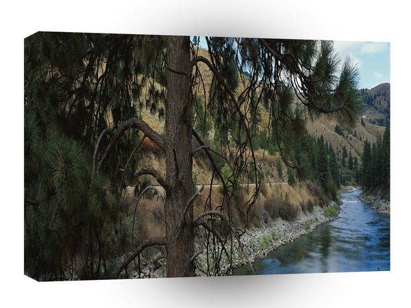 Nature River Pines Valley A1 Xlarge Canvas