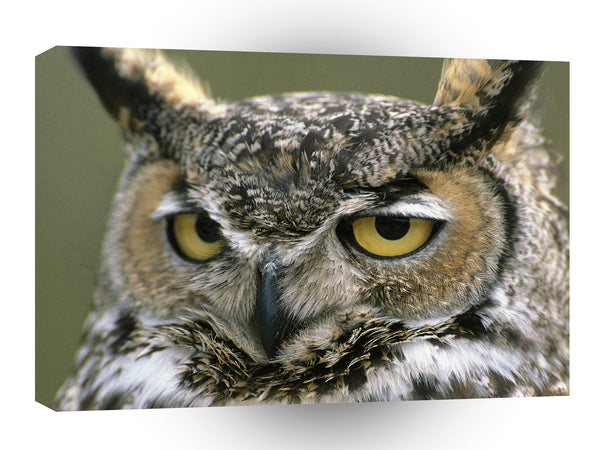 Owl Great Horned Denali National Park A1 Xlarge Canvas