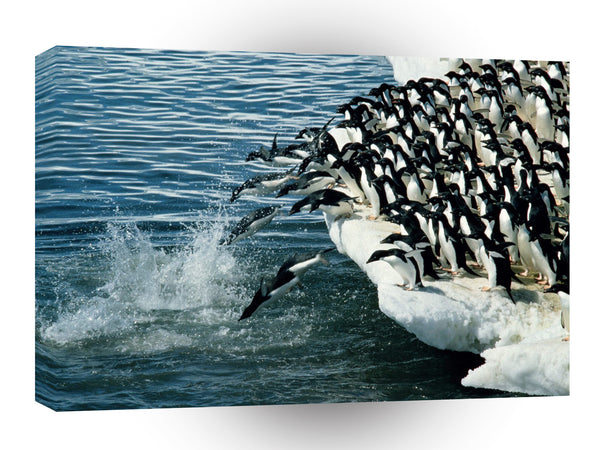 Penguin Adelie Antarctic A1 Xlarge Canvas