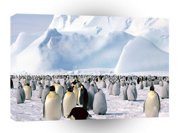 Penguin Emperor Sea Antarctica A1 Xlarge Canvas