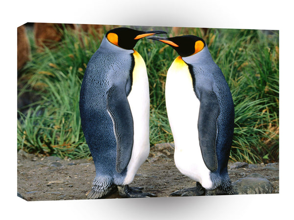 Penguin Getting All The Gossip King A1 Xlarge Canvas