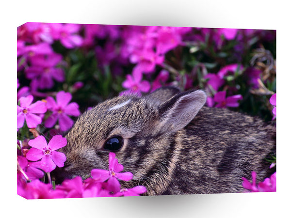 Rabbit Baby Eastern Cottontail A1 Xlarge Canvas