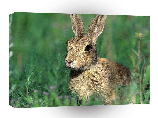 Rabbit Cottontail Field A1 Xlarge Canvas