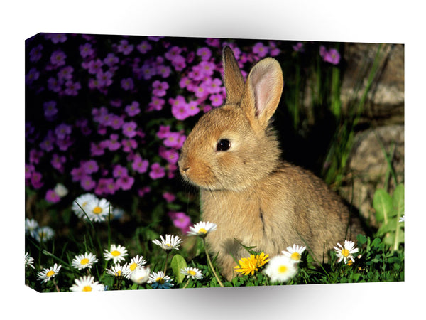 Rabbit Funny Bunny A1 Xlarge Canvas