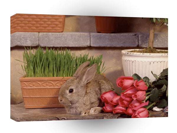 Rabbit Garden Hare A1 Xlarge Canvas