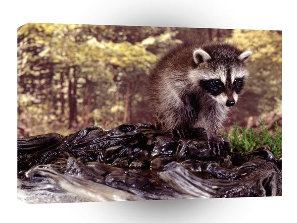 Raccoon Bath Time A1 Xlarge Canvas