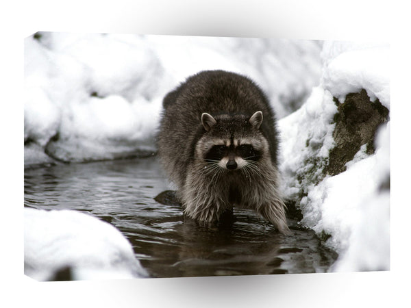 Raccoon Dinner Stroll Rib Lake Wisconsin A1 Xlarge Canvas