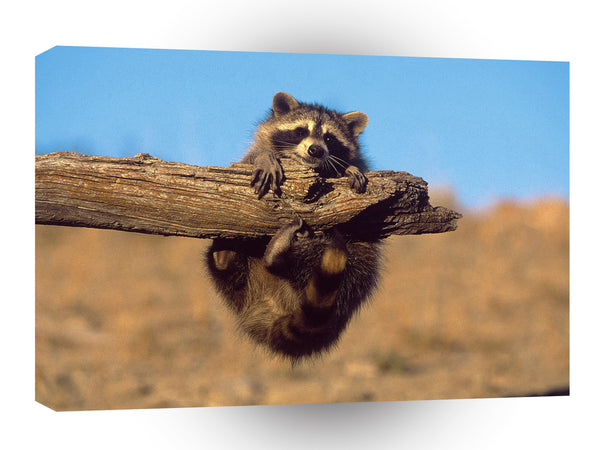 Raccoon Hang On A1 Xlarge Canvas