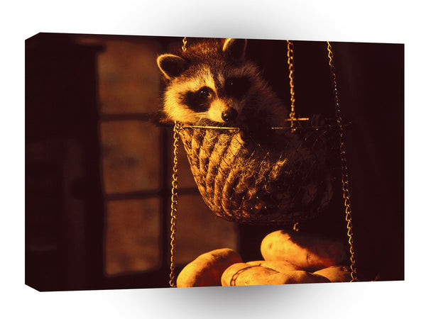 Raccoon Hanging Basket A1 Xlarge Canvas