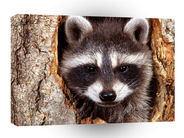 Raccoon Natural Bandit A1 Xlarge Canvas
