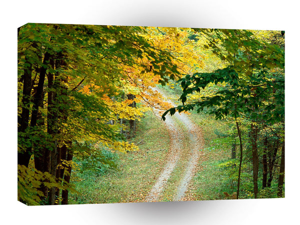 Roads Forest Trail A1 Xlarge Canvas