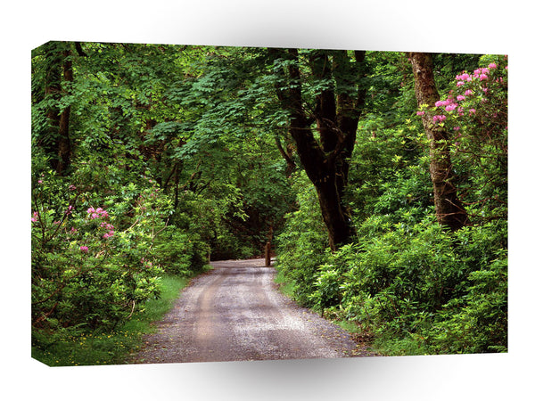 Roads Kylemore Wood Road County Galway Ireland A1 Xlarge Canvas