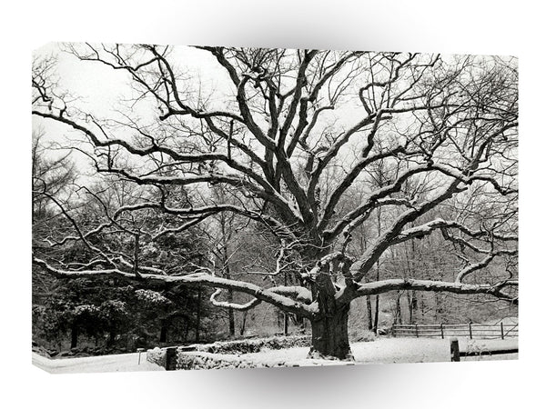Scene Bedford Oak New York A1 Xlarge Canvas