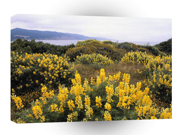 Scene Butter Lupine State Reserve California A1 Xlarge Canvas