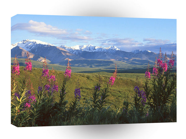 Scene Fireweed And Larkspur Denali Alaska A1 Xlarge Canvas