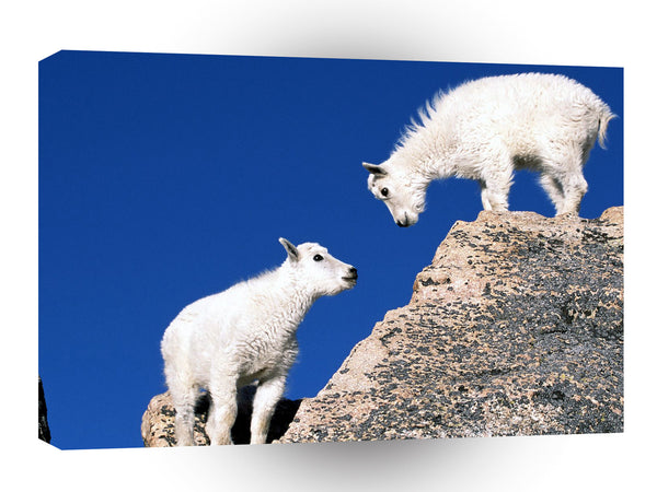 Sheep Mountain Goat Kids A1 Xlarge Canvas